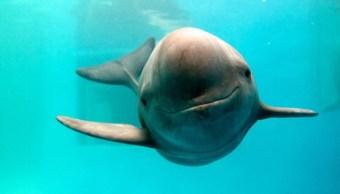 en mexico mejores cientificos-mundo salvar vaquita marina