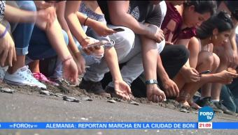 Turistas se reúnen para liberar crías de la tortuga golfina en Colima