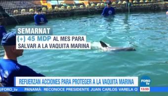 México analiza futuro de operación de rescate de la vaquita marina