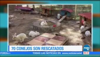 Extra, Extra: 70 conejos son rescatados durante sismo