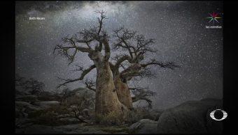 Fotografías de árboles espectaculares bajo las estrellas