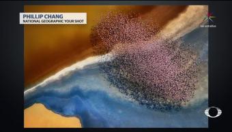 Fotografías aéreas de animales en diferentes partes del mundo