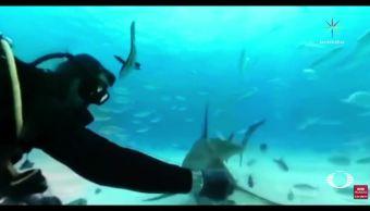 Nadar entre tiburones en 360 grados