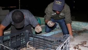 Aseguran embarcación por pesca ilegal en Alto Golfo de California