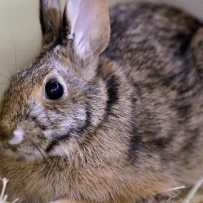 Gobierno de Polonia pide a la gente que se reproduzca como conejos
