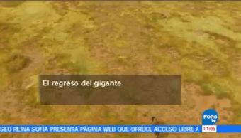 Regreso Gigante Bisonte Americano Originarios México Eu Canadá