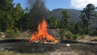 Incineran más de una tonelada de drogas en Guerrero