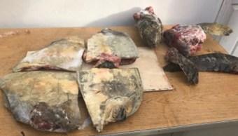 Profepa detiene a dos personas con carne de tortuga