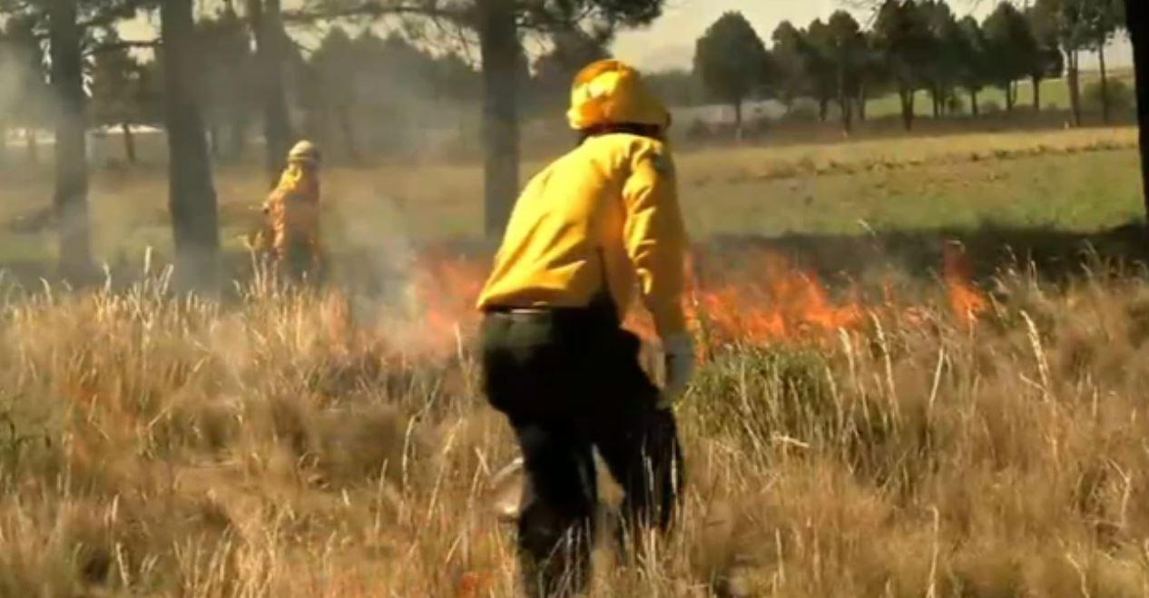 Reducen hasta 55% las afectaciones por incendios forestales en Veracruz