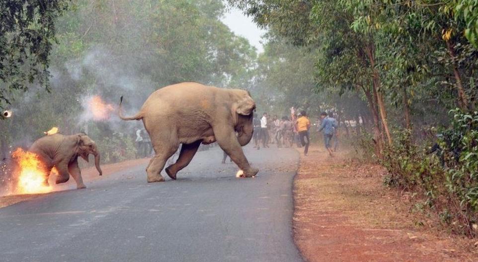 Imagen de cría de elefante en llamas ganó premio en La India
