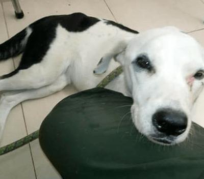 Perrita muere después de esperar un mes a sus dueños en el aeropuerto