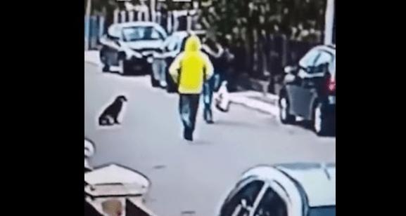 Perro callejero atrapa a un ladrón cuando intentaba robar a una señora