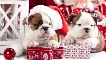 Mascotas_Navidad
