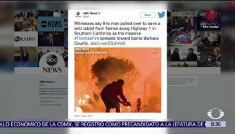 Joven rescata a una liebre de los incendios en California