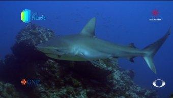 Por el Planeta: Tiburones del archipiélago de Revillagigedo