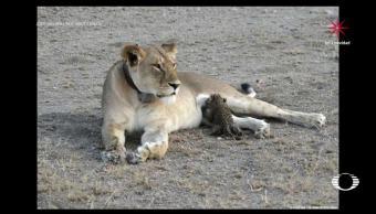 Historias de animales raros, National Geographic