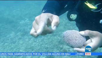 Extra Extra: Todos somos descendientes de las esponjas de mar