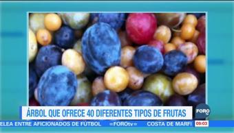 Extra Extra: Árbol ofrece 40 diferentes tipos de frutas