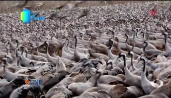Por el Planeta: Reserva Natural de Ein Afek