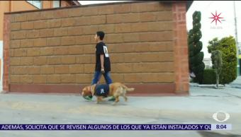 Perros alertan y auxilian a niños que padecen diabetes