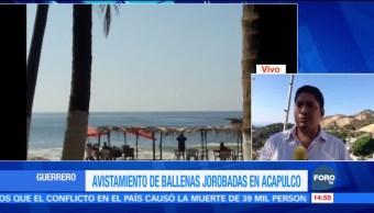 Avistan dos ballenas jorobadas en costas de Guerrero