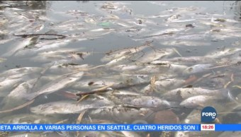 Investigan muerte de peces en Saltillo, Coahuila