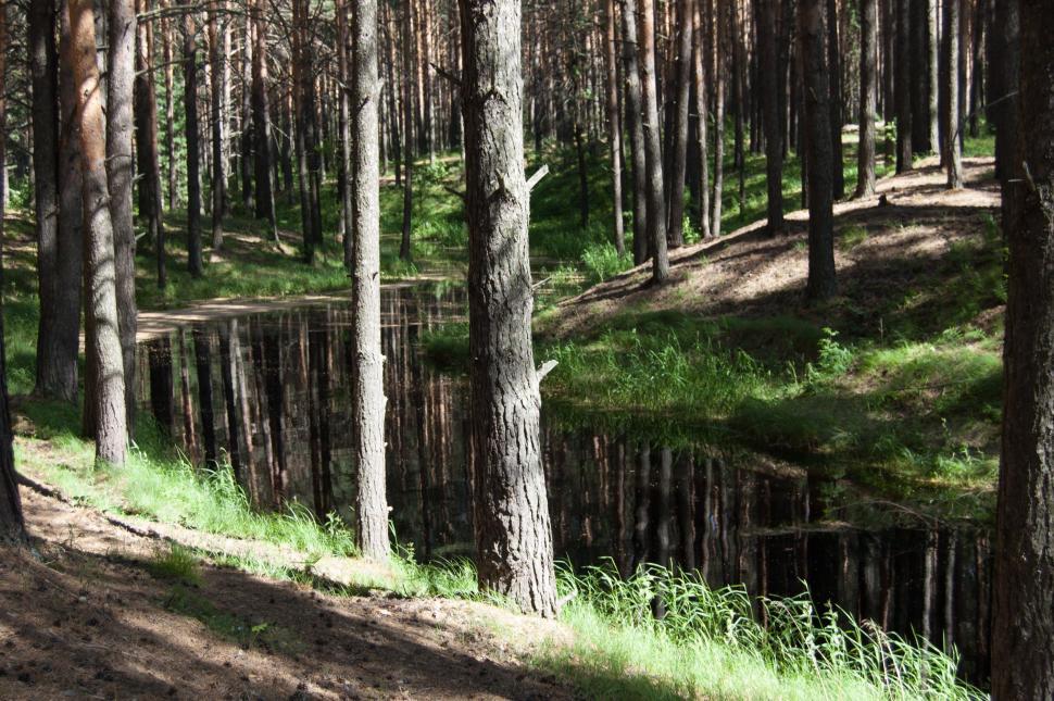 Ecologismo en las experiencias Socialistas. Bosque-siberia-rusia-naturalez
