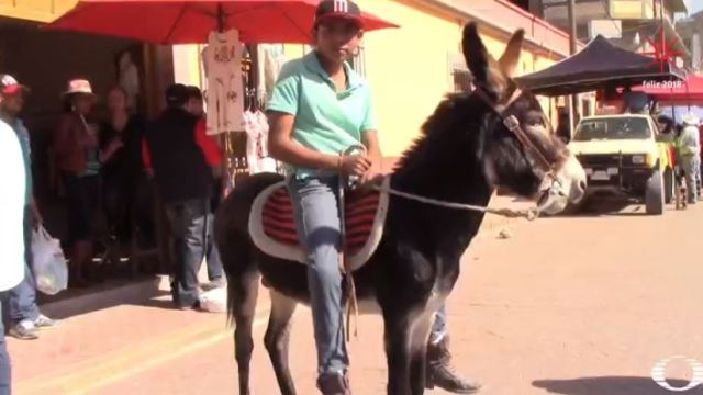 Celebran la tradicional carrera de burros de Navidad