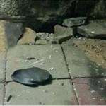 israel ataca centro de hamas en gaza