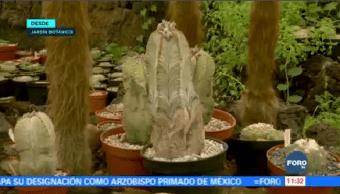 Conoce Importancia Jardín Botánico Unam Medio Ambiente