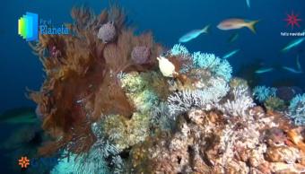 Turismo sustentable protege corales y especies de Revillagigedo