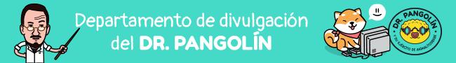 dr-pangolin-doctor