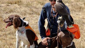 perros aguilas halcones controlan fauna aicm