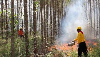 Aumentan los incendios forestales en Colima, reportan autoridades