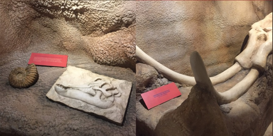 Museo de Arqueología Subacuática de Campeche exhibe cientos de piezas