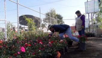 Productores de rosas en Atlixco, listos para la vendimia