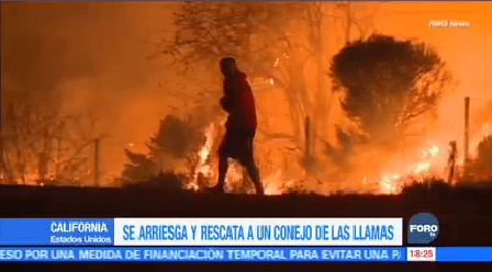 Rescatan Conejo Atrapado Incendio California