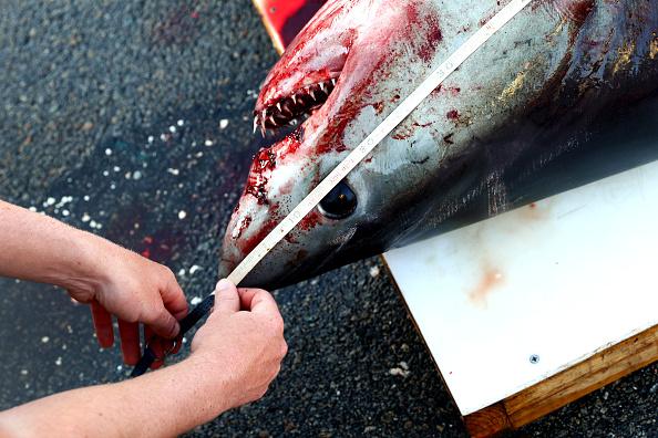 localizan cientos de tiburones muertos en isla del persico