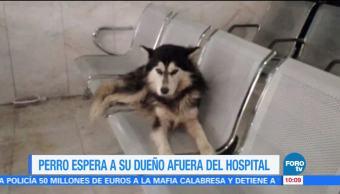 Extra Extra: Perro fiel espera a su dueño afuera del hospital