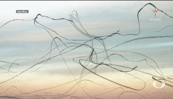 Con cronofotografía, documentan patrones de vuelo de las aves