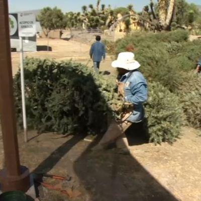 Instalan centro de acopio para reciclar árboles de Navidad en Pachuca