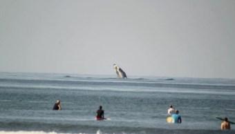 ballenas sorprenden turistas y habitantes union guerrero