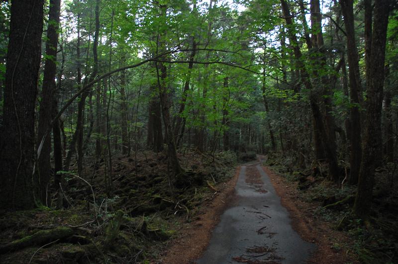 Aokigahara: La historia del bosque de los suicidios