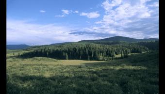Bosque Nacional Grand Mesa en Colorado, EU