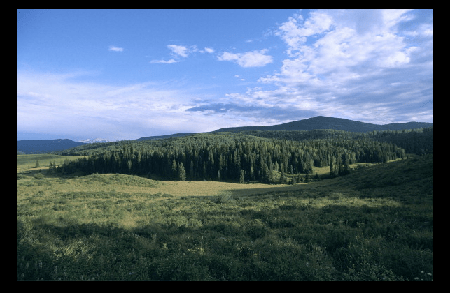 Bosque Nacional Grand Mesa en Colorado, EU