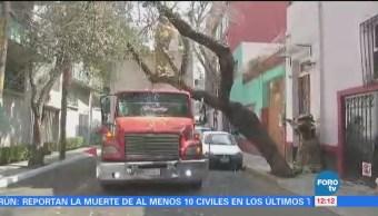 Cae árbol en la colonia San Pedro de los Pinos, CDMX