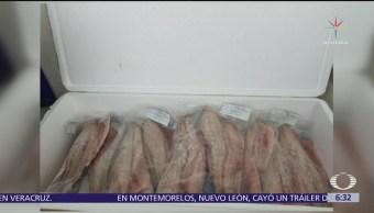 Decomisan 28 kilos de totoaba en Hong Kong, procedente de Sonora