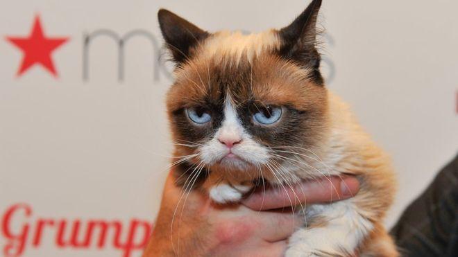 Cómo Grumpy Cat ganó una demanda contra una marca de café