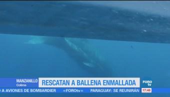 Estudiantes Colima Rescatan Ballena Enredada Red Pesca
