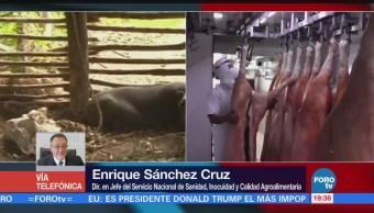 EU declara que México está libre de la fiebre porcina